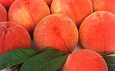 果物.jpgのサムネイル画像のサムネイル画像