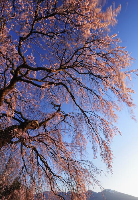 http://www.sakukankou.jp/MT/mtblog/info/02.jpg