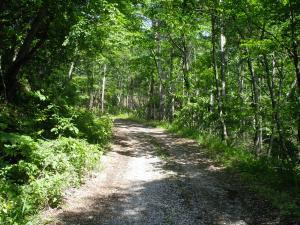 森林セラピー癒しの森の小径.jpg