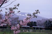 11 【入選】 牧場の春(岩下文彦).jpg