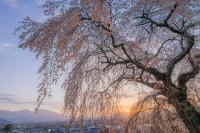 01【佐久市観光協会長賞】朝陽(花岡直樹).jpgのサムネイル画像