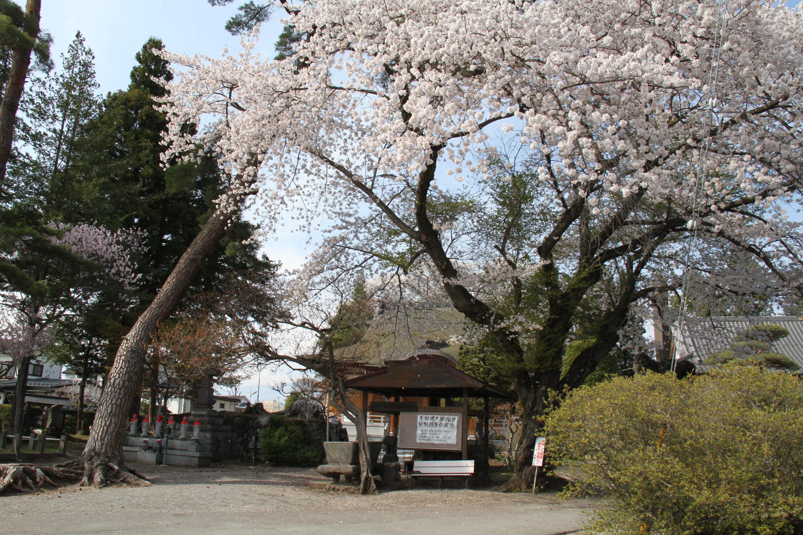 http://www.sakukankou.jp/sightseeing/%E5%86%86%E6%BA%80%E5%AF%BA2.JPG