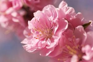 花の見どころカレンダー